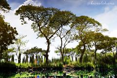 Reflection (keanulaksana) Tags: reflection sky cloud trees beautiful wallpaper background nature indonesia surabaya garden secretgarden rotate colorful landscape cool highresolution