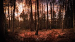 Forest Fork (Augmented Reality Images (Getty Contributor)) Tags: autumn canon colours fall forest landscape leefilters light longexposure nature perthshire scotland sunset trees woodland