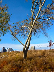 Sky so blue (Gordonlaurie) Tags: nyc rooseveltisland