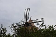 IMG_3183 (douaystephane) Tags: daudet fontvieille moulin provence