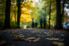I still believe (ewitsoe) Tags: autumn fall street landscape lowdof ewitsoe nikond80 35mm parksolacki trees woods mood forest poznan poalnd focus peope bokeh lotsofbokeh