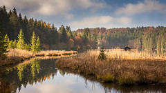 Cabin on the lake (hjuengst) Tags: hackensee landschaftennatur see bavaria lake hut cabin cottage forest woods reflection autumn fall kleinhartpenning