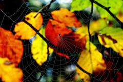"""""""My artwork"""" - fine spider web in the forest (ej - photographie) Tags: spinnen netz spider october oktober wald forest spiderweb spinnennetz olympus omd em5 macro makro em5markii bltter herbst automn morgentau tau mzuiko schweiz m60mmf28macro suisse svizzera zrcheroberland gossau bokeh brilliant favorites"""