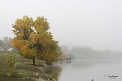 Llegó el otoño.... (cienfuegos84) Tags: agua lago niebla arbol tree foggy otoño autumn verde amarillo nature naturaleza