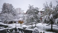 der erste Schnee im November (p.schmal) Tags: panasonicgx7 hamburg farmsenberne schnee