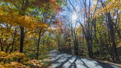 Sunny Maples Road  (Sharleen Chao) Tags: nationalpark japan aomori autumn maples cpl canon 5dmarkiii 1635mm      sunburst       sunny day travel