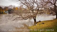 Torino (20) (cattazen.com) Tags: alluvione torino po esondazione parcodelvalentino murazzi pienadelpo cittditorino turin piemonte