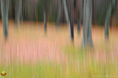 Dancing Trees in the Fall - Chestnut Ridge Park - Orchard Park, NY (DTD_5420) (masinka) Tags: outdoors impressionistic impressionism photographic photography landscape nature painting vision fall autumn colors trees trunks chestnutridge park orchardpark ny newyork leaves buffalo suburb motion blur abstract imaginary imagination mood moody painterly artistic art wallart walldecor homedecor etbtsy subtle muted