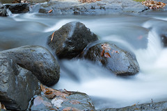 Fast Water (William_Doyle) Tags: black river hacklebarney state park water movement leaves rocks nature woods trees november 2016 canon vanguard