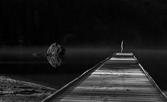 Quai des brumes (martineturpeau) Tags: brume mist ponton lacchambon lake auvergne massifdusancy france noir et blanc