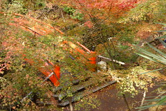 DSC02774 (MrSUIZOU) Tags: 京都 紅葉 北野天満宮 平野神社 十月桜