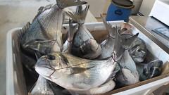 Orate (RoBeRtO!!!) Tags: rdpic sea fish sparusaurata pesce mare orata food cibo