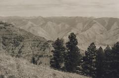 Hell's Canyon Overlook 6, 2016 (Sara J. Lynch) Tags: sara j lynch hells canyon overlook eastern oregon trees erosion rugged asahi pentax k1000 black white 35mm film