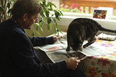 338/366 Fred Trying to Read the Paper (ruthlesscrab) Tags: wah werehere hereios 366the2016edition 3662016 day338366 3dec16 reading newspaper notmycat cat