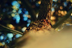 Look up!  ( Mo'men Saleh) Tags: tree bokeh bokehlicious 50mm nature naturallight warmlight