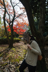 20161204-DS7_6491.jpg (d3_plus) Tags:  a05 wideangle d700 thesedays  architecturalstructure   kanagawapref   sky park autumnfoliage  japan   autumn superwideangle dailyphoto nikon tamronspaf1735mmf284dild  street daily  architectural  fall tamronspaf1735mmf284dildaspherical touring streetphoto  nikond700 tamronspaf1735mmf284 scenery building nature   tamron1735   tamronspaf1735mmf284dildasphericalif   autumnleaves
