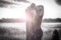 Monolith (#Weybridge Photographer) Tags: park uk england tree slr sunrise canon lens eos dawn open britain decay space united great earlymorning royal parks kingdom adobe lensflare flare dslr lightroom bushypark bushy richmonduponthames 40d