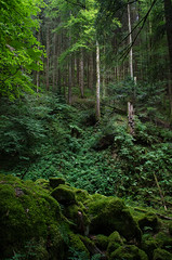 50 Shades of Green (Choice City Chris) Tags: vacation holiday forest woodland germany woods schwarzwald blackforest