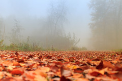 Autumn: foggy afternoon (H. Bos) Tags: autumn mist weather fog season herfst autumnleaves autumncolors herfstkleuren almere weer oostvaardersplassen seizoen almerebuiten herfstbladeren oostvaarders