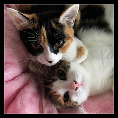 Sisters Forever (Seeing Things My Way...) Tags: cat pet beloved love