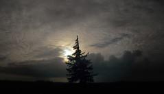 Freistehende Fichte auf einer Viehweide; Meggerdorf Stapelholm (5) (Chironius) Tags: sky clouds germany deutschland nuvole himmel wolke wolken ciel cielo alemania nuage allemagne nube hemel germania schleswigholstein gkyz ogie pomie    niemcy   stapelholm meggerdorf pomienie szlezwigholsztyn