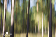 Shapes And Colors (chriskli1103) Tags: wood abstract nature forest nikon outdoor abstractart natur shapes holz wald farbe farben abstrakt formen farbenpracht drausen d7200 nikond7200