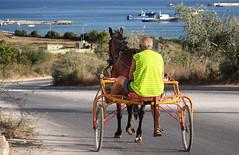 Sulky (panoround hutter) Tags: sulky mare sea voyage horse malta gozo ttot travel traveltips colours smörgåsbord hutterdesign