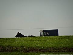 samsebeskazal.livejournal.com-04939.jpg (samsebeskazal) Tags: unitedstates pennsylvania farm amish lancaster lancastercounty buggy pennsylvaniadutch birdinhand