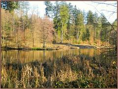 Winter am Ebnisee (almresi1) Tags: wood lake see wald spiegelung schilf mirroring althtte schwbischfrnkischerwald welzheim ebnisee