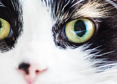 Creeper in the eye (laurenvmcc) Tags: macro reflection cat chelsea