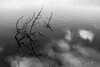 It Was Always There (Charles Rommens) Tags: arm reflecting water abstract bw minimal lake twig light extension minimalism reflection nikond3300 reflective symmetry pondering dark black clouds dorst blackandwhite white branch woman
