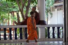 _MG_3159-le-14_04_2016-wat-thail-wattanaram-christophe-cochez (christophe cochez) Tags: burmes burma birmanie birman myanmar thailand thailande maesot myawadyy monk bonze novice religion watthailwattanaram travel voyage bouddhisme buddhism portrait