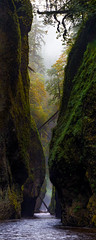 Foggy rain day in Oneonta Gorge (Mstraite) Tags: gorge columbia columbiarivergorge water nature stunning sharp fog depth color panorama pano vertical oregon outside hike river green danger log logs contrast canon sigma