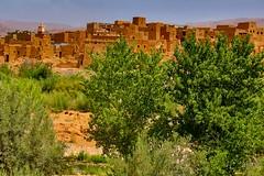 TPD_2802 (Tomasz TDF) Tags: africa afryka marako morocco tinghir soussmassadraa ma