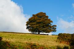 Tree and Gate above Beeley Brook (milo42) Tags: peak district national park httpwwwchrisnewhamphotographycouk 2016 meetup chatsworth peakdistrictnationalpark peakdistrict beeley england unitedkingdom gb