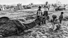 @Pushkar, Rajastan (ayashok photography) Tags: rangderajasthan nikon ayashok ayashokphotography nikond300 nikond700 nikkor24120mmvr rajasthan pushkar camelfair camels market india rajastan rajasthani ayp9459 bw