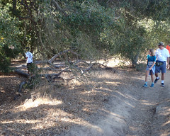 016 Leaving The Trail (saschmitz_earthlink_net) Tags: 2016 california orienteering topangacanyon statepark laoc losangelesorienteeringclub losangeles losangelescounty santamonicamountains
