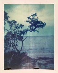 Polaroid Week Day Six - Cypress Point (dreamscapesxx) Tags: instant polaroid peelapart supershooter polaroid669film expiredfilm overlookingthebay lateevening cloudy overcast overcastevening tampabay tampafl cypresspointpark polaroidweek daysix snapitseeit