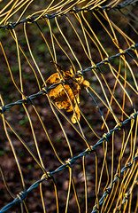 Stuck (docoverachiever) Tags: lines warm sunset diagnonal hff leaf one wire light fence