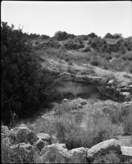 Horvat Midras (Dan.Arad) Tags: plaubel makina 670 ilford fp4 125 kodak d76 11