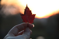 Fall Rise (Jane Inman Stormer) Tags: leaf maple hand backlight sunrise red light sun october indiana hanovercollege