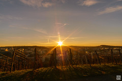 DSC01357 (SVNKNR) Tags: stuttgart deutschland germany weinberg vineyard herbst autumn sonnenuntergang sunset landschaft landscape stdtisch urban sony sonyalpha alpha6000 a6000
