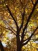 El otoño llega a Anento/La tardor arriba a Anento Pd: El gps llama erroneamente el lugar. Es el paraje del Aguallueve (Bernardí) Tags: jiloca anento