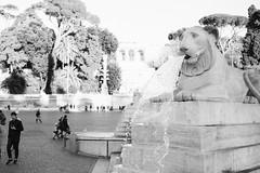 Falling water (lorenzoviolone) Tags: bw blackwhite blackandwhite finepix fujix100s fujifilm fujifilmx100s monochrome piazzadelpopolo polaroid665 terrace vsco vscofilm x100s cobblestone fountain lion mirrorless popolossquare sculpture statue strangers streetphoto streetphotobw streetphotography trees walk:rome=nov292016 waterfall roma lazio italy