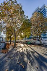 Autumn on the Wharf 13th Nov (19 of 37) (johnlinford) Tags: autumn canarywharf canon canonefs1022 canoneos7d docklands e14 landscape london towerhamlets urban urbanautumn