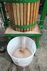 Fresh apple juice from a cider press2 (Local Food Initiative) Tags: permaculture apple day apples press pressing cider group sustainable orchard juice fresh pressed