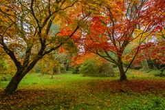 ''Minterne Autumn'' (marcbryans) Tags: minterne dorset autumn colours orange trees nikond7100 tokina1116mm outdoors