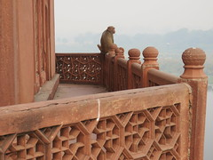 2016-11-04 Taj Majal - the Monkey sitting on the side of the mosque (Travel With Olga) Tags: tajmahal india agra mosque islam religion tomb mausoleum crypt mughal mogul mongol architecture monument cenotaph marble smog pollution monkey pools islamicart sandstone shahjahan mumtaz love lovers