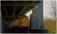 He's behind you ! (peterdouglas1) Tags: 6d43 valleyflasks britanniabridge lions class37sdirectrailservices 37059 37610