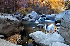 Mud Rock (csnyder103) Tags: petey fall cascade river boulders boulder water longexposure greenriver thenarrows dog pose still fotodioxwonderpana canoneos6d tokina1628f28